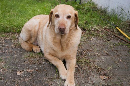 大型犬の火葬時間と費用は?亡くなったペットの正しい安置方法も解説
