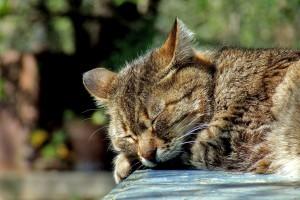 cat-590684