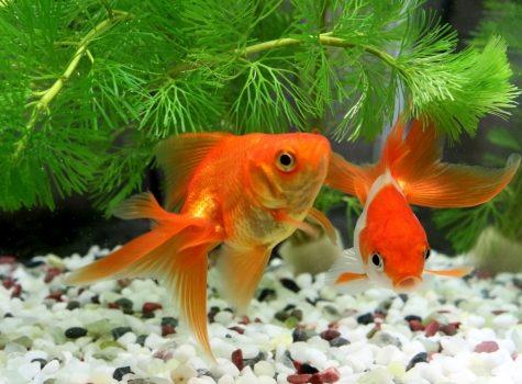 大切にしていたお魚とお別れ…供養手段と葬儀の流れと費用