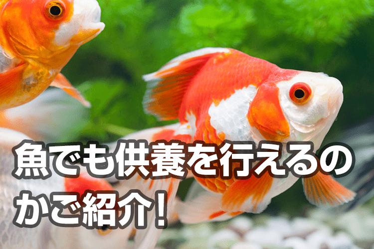 魚でも供養を行えるのかご紹介!