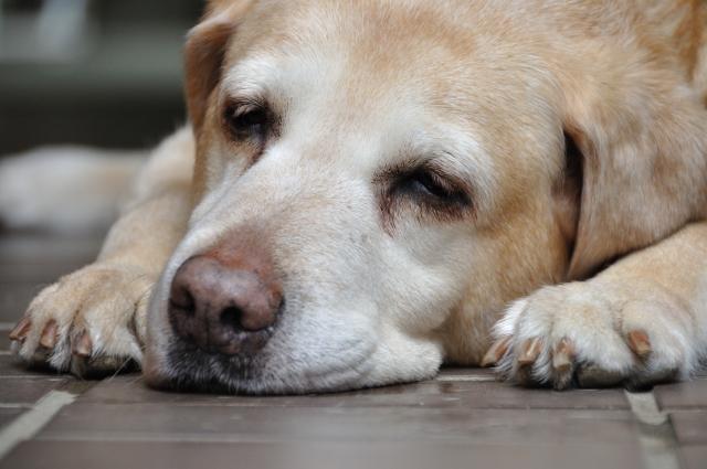 ペットの49日について知ろう。法要の中身と3つの納骨方法をご紹介
