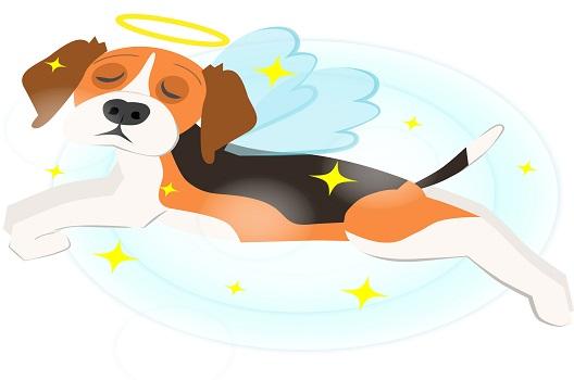 ペットの移動火葬車について