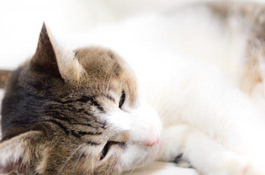 【ペット葬儀】大切なペットのための霊園|当日でもご相談ください
