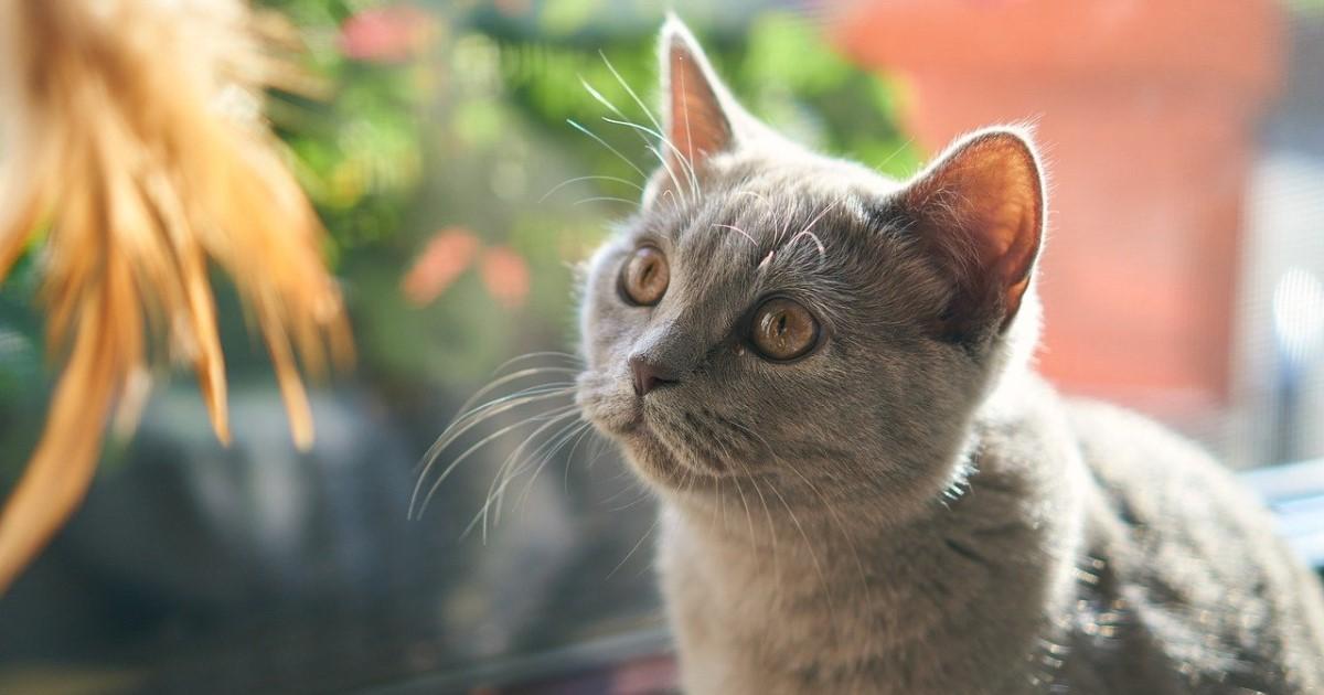 猫の火葬料金|火葬方法や火葬前準備~供養までの流れも解説します