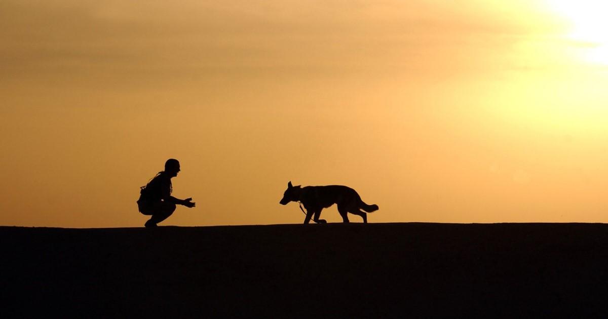 火葬で愛犬をお見送りしたい……火葬の種類、準備、業者選びについて