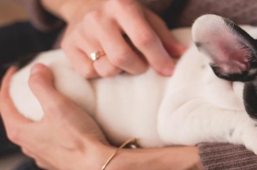 ペット供養の選び方|自宅・霊園・散骨それぞれの特徴と方法をご紹介
