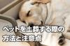 ペットを土葬する際の方法と注意点【大切なペットを亡くした方へ】